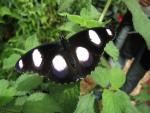 Schmetterlingserlebniswelt Pfronten